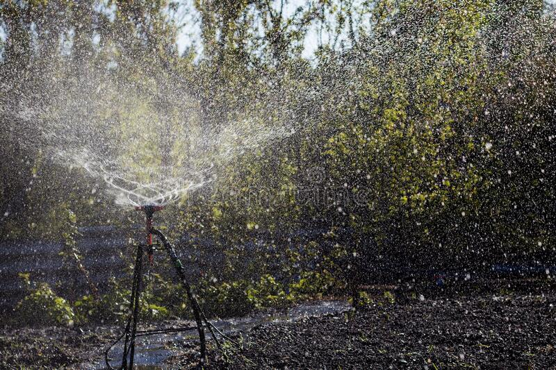Automatic Sprinkler irrigation system watering in the cotton farm.  stock photography