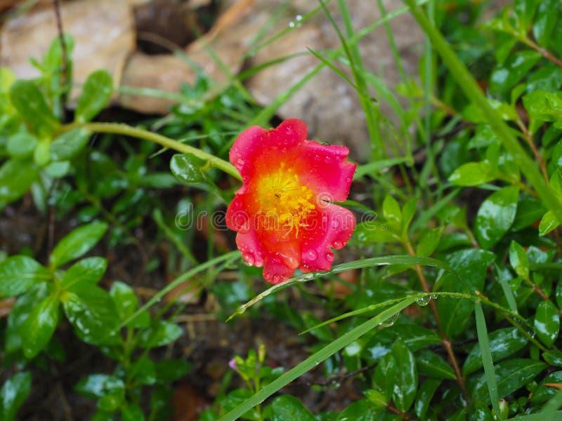 Automatic watering system makes beautiful flowers. Summer, irrigation, green, spray, technology, field, gardening, irrigate, grass, sprinkler, nature, wet stock photos