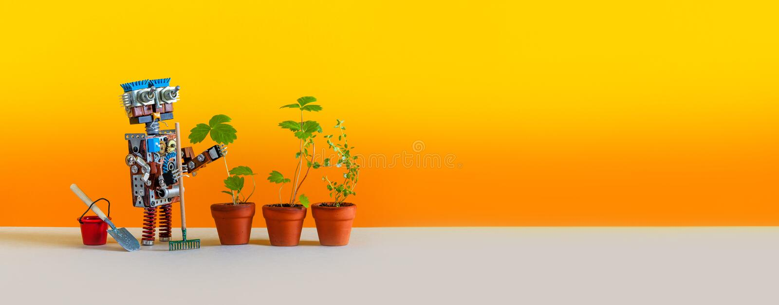 Automation agriculture robotic gardening technology. Robot gardener with bucket shovel rake and sprouts of wild. Strawberries in clay flower pots. Yellow royalty free stock photo