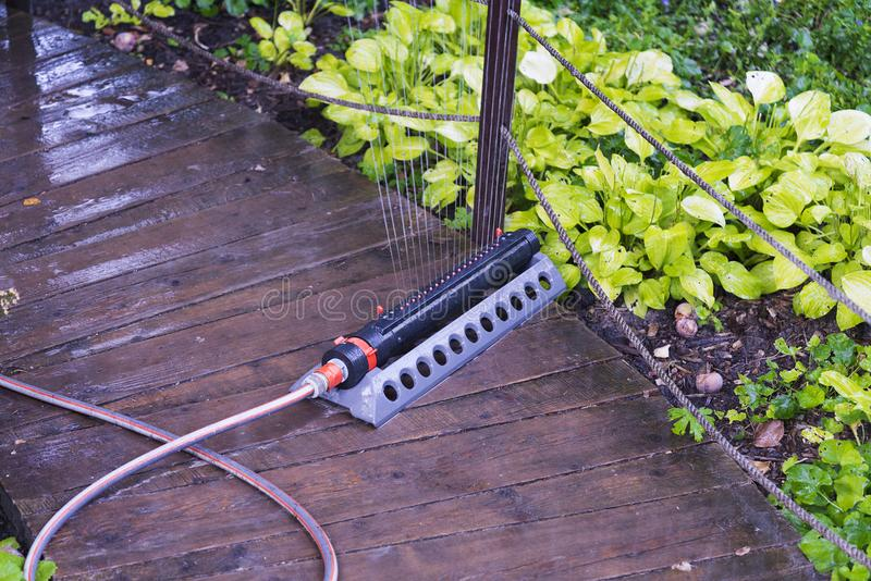 Automatische Gartenberieselungsanlage, die gelbe Anlagen im Garten wässert stockbild