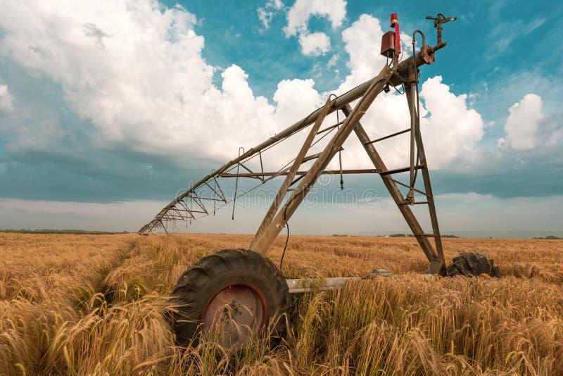 Automatisiert, Bewässerungsmaschinerie mit Berieselungsanlagen auf dem Gerstengebiet bewirtschaftend stockfotos