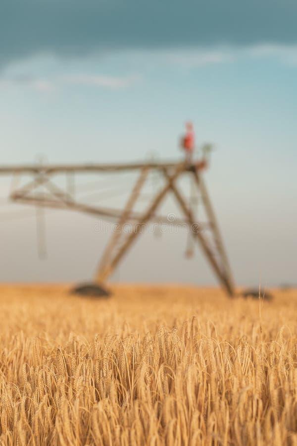 Automatisiert, Bewässerungsmaschinerie mit Berieselungsanlagen auf dem Gerstengebiet bewirtschaftend stockbilder