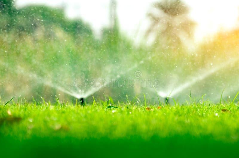 Automatisk gräsmattaspridare som bevattnar grönt gräs Spridare med det automatiska systemet Trädgårds- bevattningsystem som bevat arkivbild