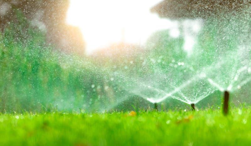 Automatisk gräsmattaspridare som bevattnar grönt gräs Spridare med det automatiska systemet Trädgårds- bevattningsystem som bevat fotografering för bildbyråer