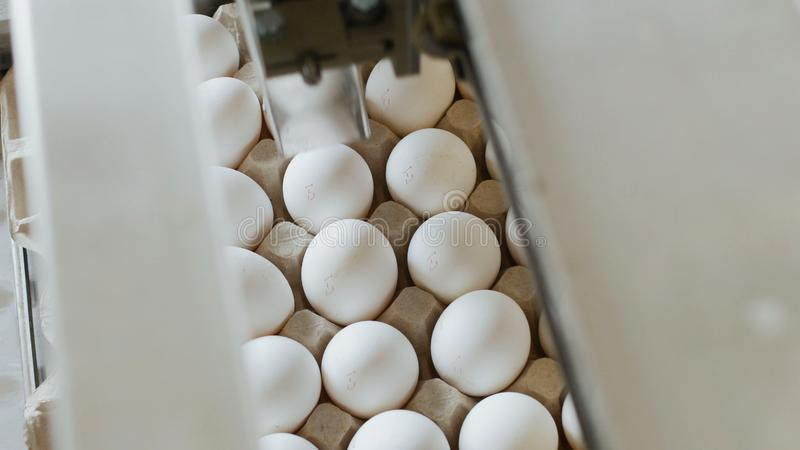 Automatisk process av att kontrollera och att skriva ut på fega ägg som sorterar ägg, sortiment royaltyfria foton