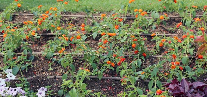Automatiskt bevattningsystem för blommor i trädgården royaltyfri foto