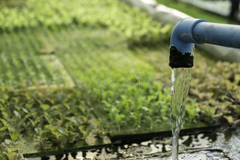 Automatización hidropónica para el huerto verde vegetal del roble, tecnología elegante moderna orgánica del agua y del fertilizan fotografía de archivo