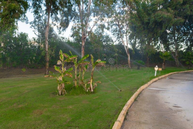 Automatyzujący nawadniający system w parku Nawadniać zielonej trawy, drzew i krzaków, zdjęcia royalty free