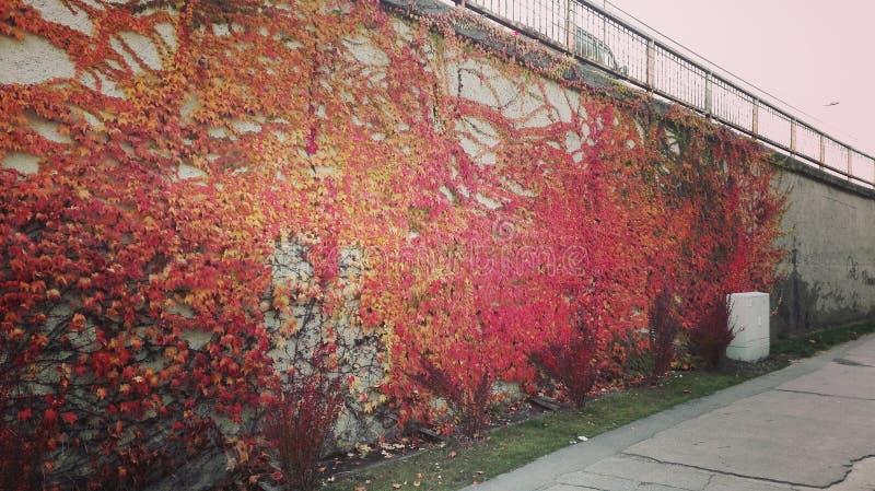 automn φύλλα στον τοίχο στοκ εικόνα