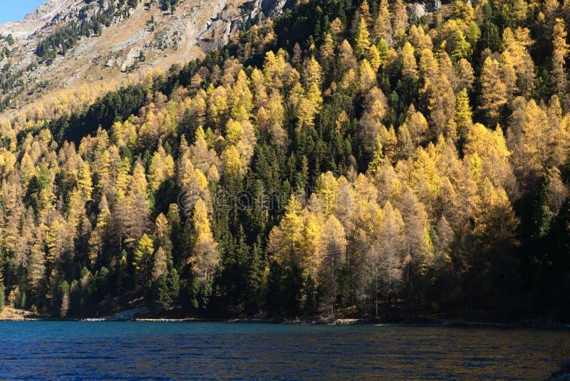 Automn las w spadków Colours zdjęcia stock