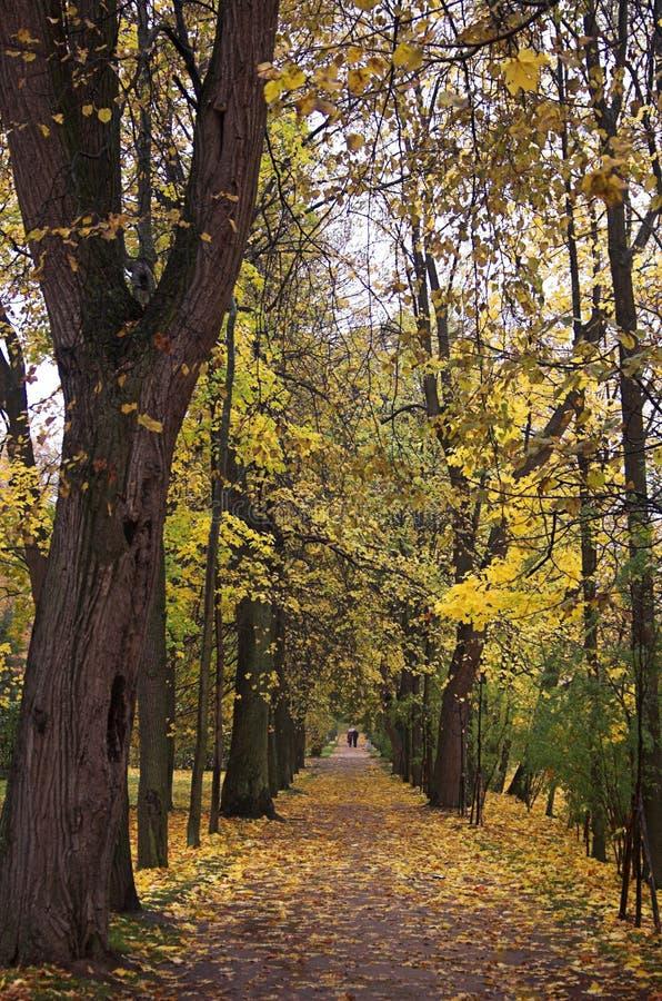 Automn park walk 2 royalty free stock photo