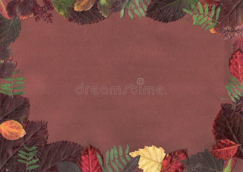 Download Automnal frame. stock illustration. Image of november - 11515250