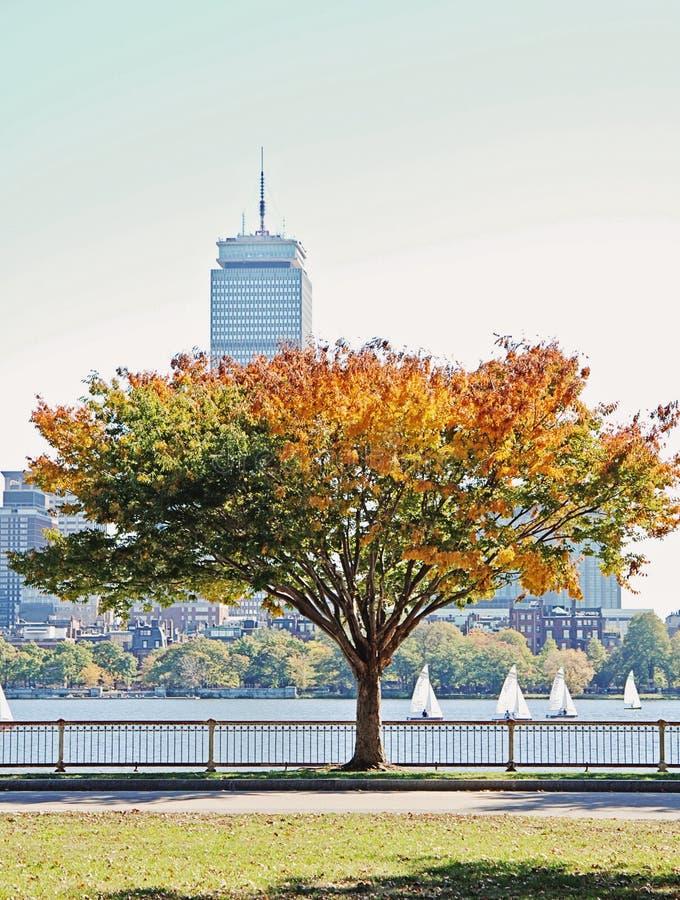 Download Automne à Boston photo stock. Image du lecteur, famille - 87701532