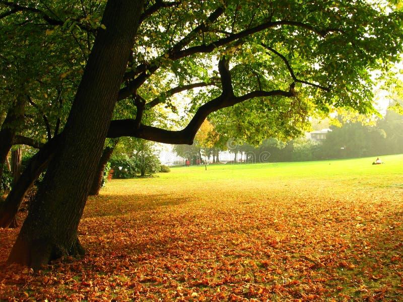 automne photographie stock