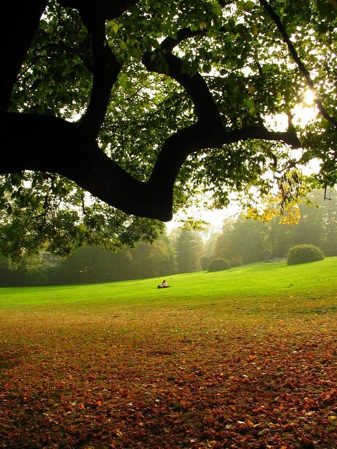 automne photos stock