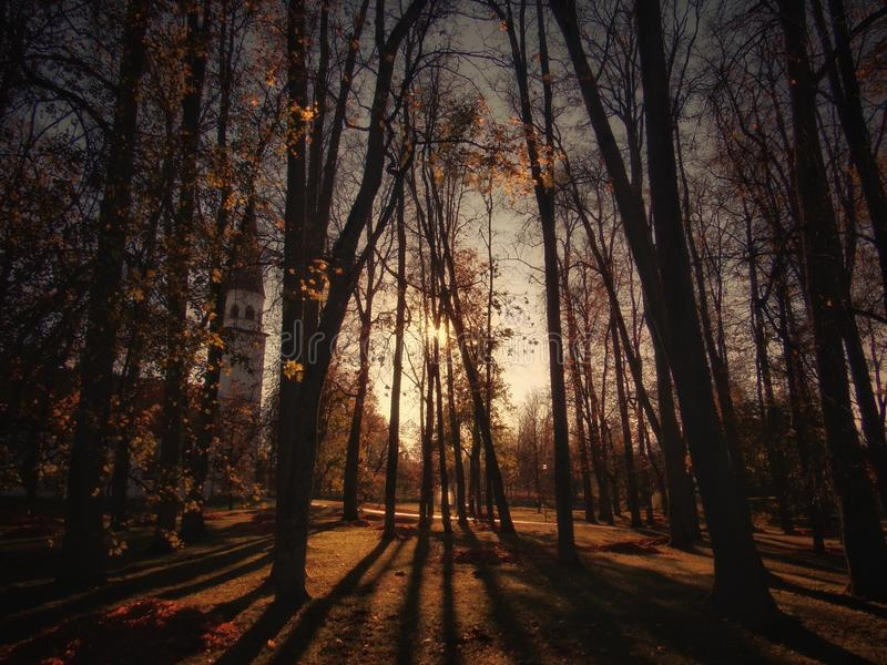 Automne photo stock