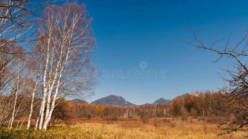 Automne au plateau de Senjogahara en parc national de Nikko, Nikko Tochigi, Japon photo stock