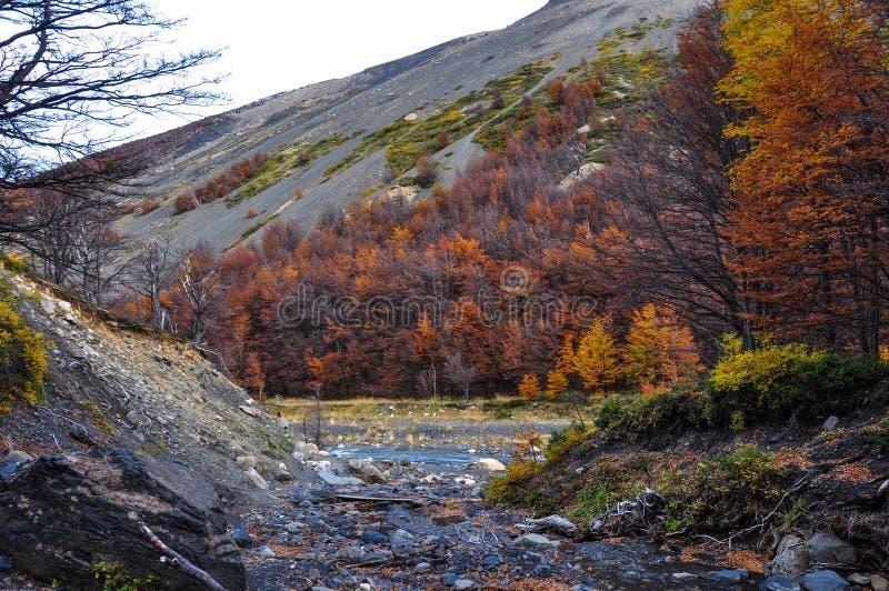 Automne/automne dans Parque Nacional Torres del Paine, Chili images libres de droits
