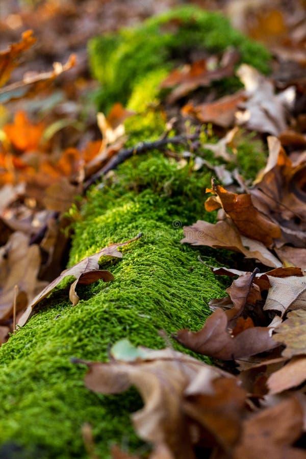 Automne avec de la mousse sur un bois et des feuilles photographie stock libre de droits
