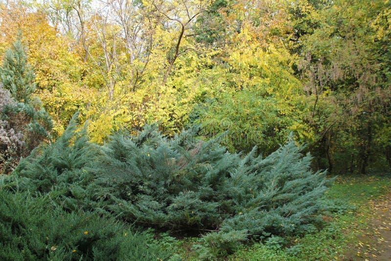 Automne avec les feuilles colorées au jardin botanique images stock