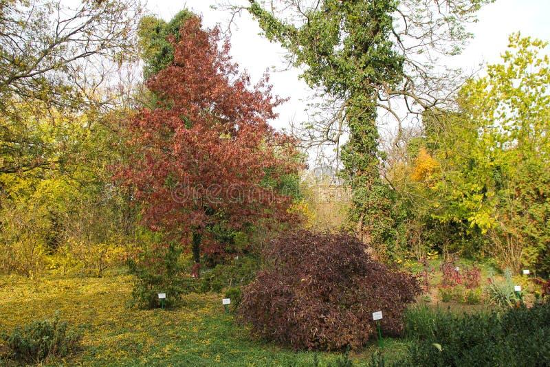 Automne avec les feuilles colorées au jardin botanique photos stock
