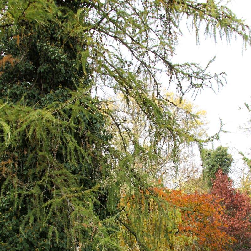 Automne avec les feuilles colorées au jardin botanique image libre de droits
