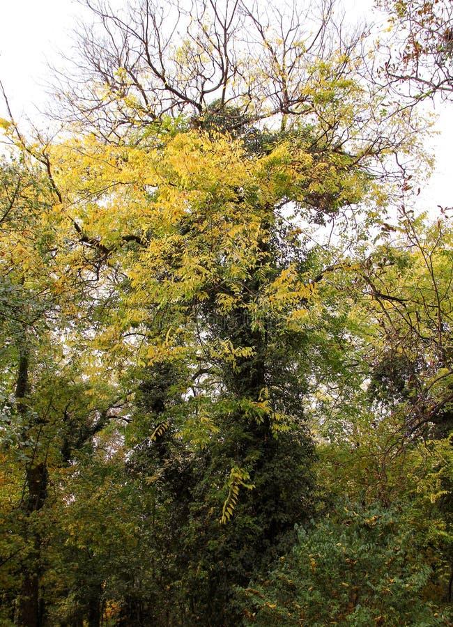 Automne avec les feuilles colorées au jardin botanique photos libres de droits