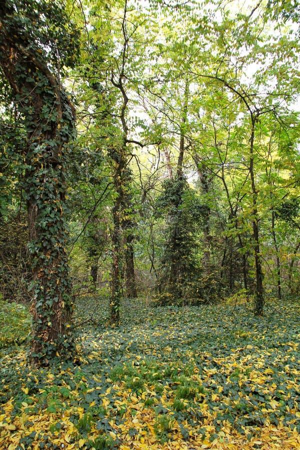 Automne avec les feuilles colorées au jardin botanique image stock