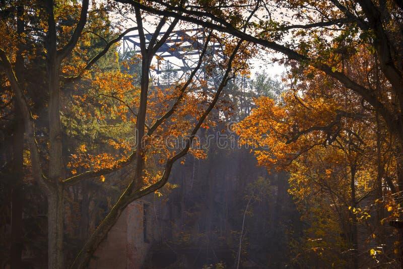 Automne coloré dans la forêt images stock