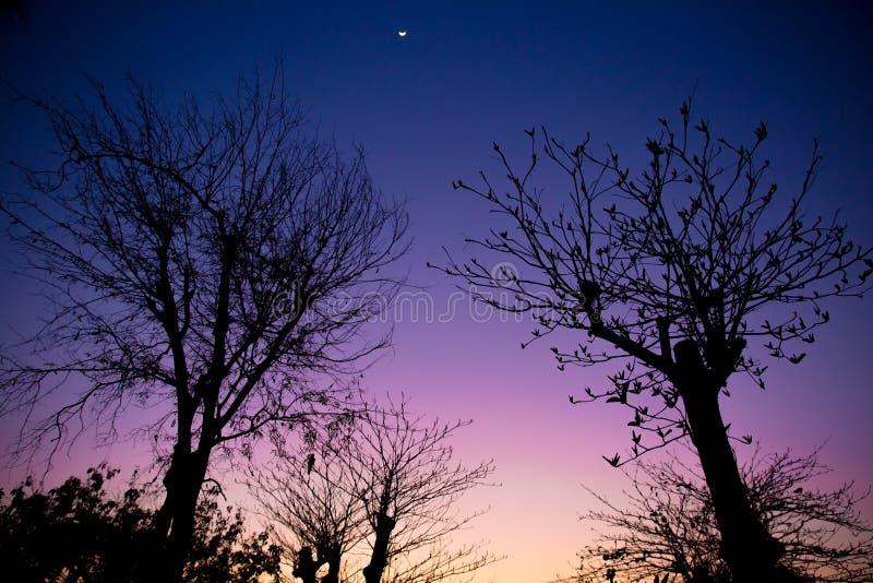 Automne crépusculaire de ciel avec l'arbre sec par silhouette photo libre de droits