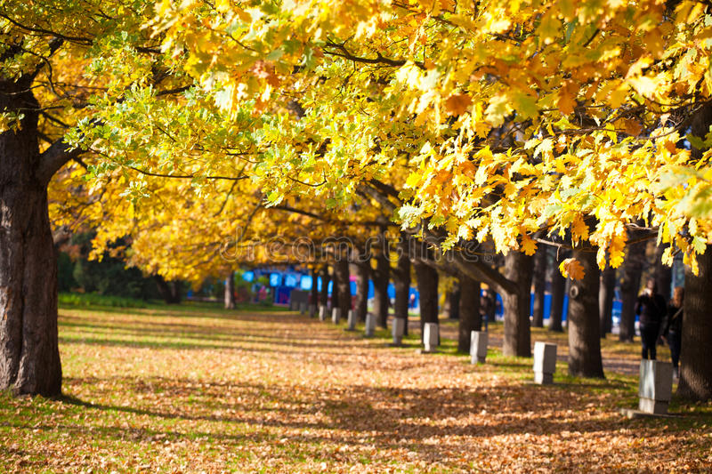 Automne d'or photographie stock