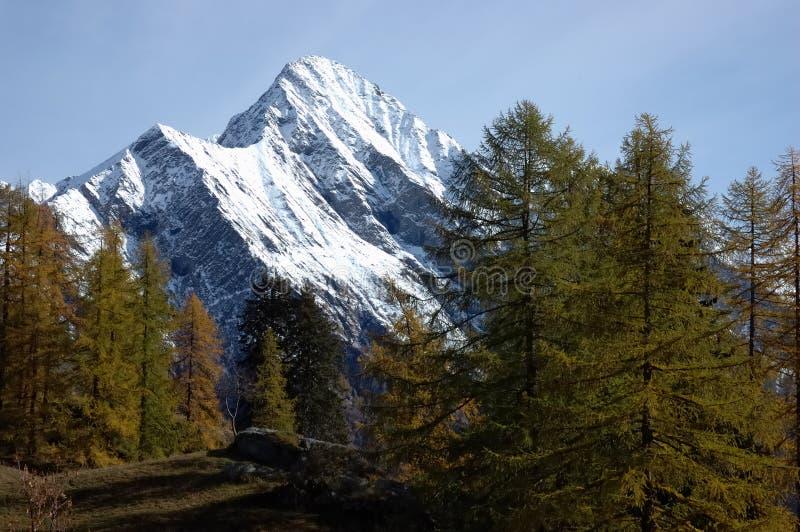 Automne d'arbre de montagne photographie stock