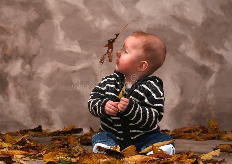 Automne d'automne de chéri photos libres de droits