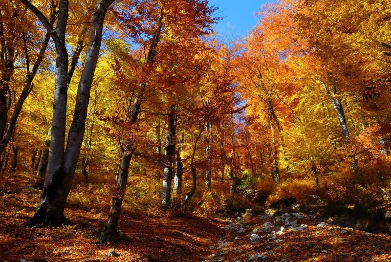 Automne d'horizontal dans la forêt photographie stock