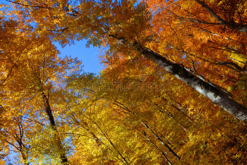 Automne d'horizontal dans la forêt photo libre de droits