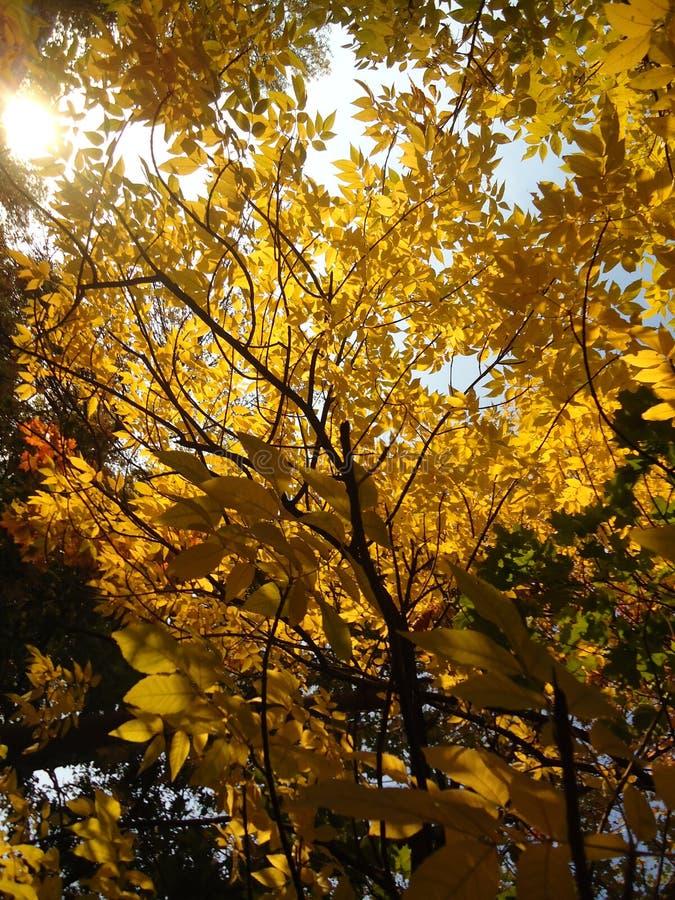 Automne dans l'arbre de nature de feuille de parc jaune photographie stock