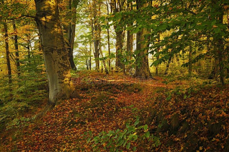 Automne dans la forêt images stock