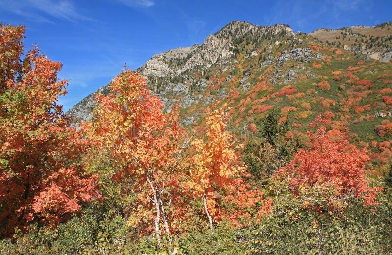 Automne dans la forêt nationale d'Uinta, Utah photo stock