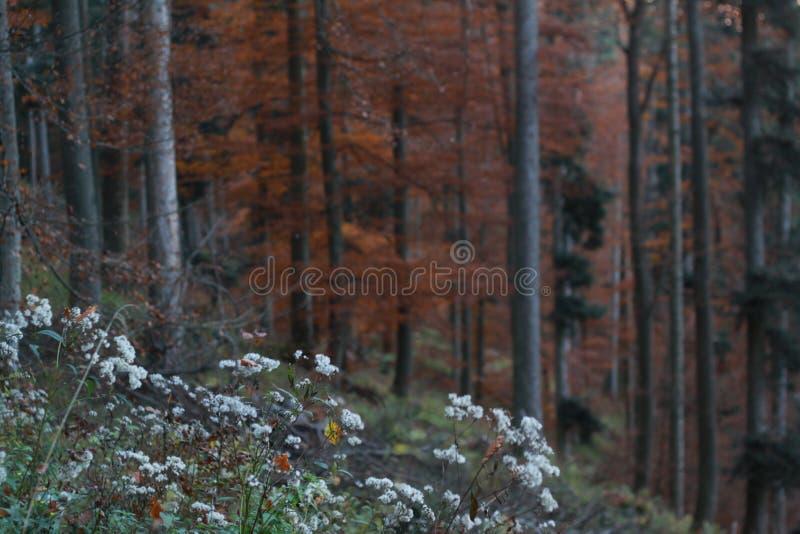 Automne dans la forêt noire images libres de droits