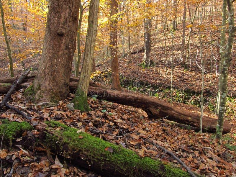 Automne dans le Woods4 image libre de droits
