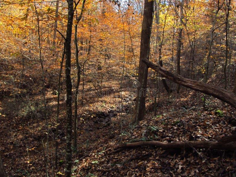 Automne dans le Woods7 images libres de droits