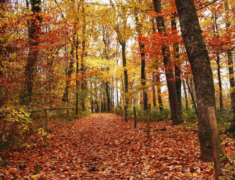 Automne dans les bois image stock