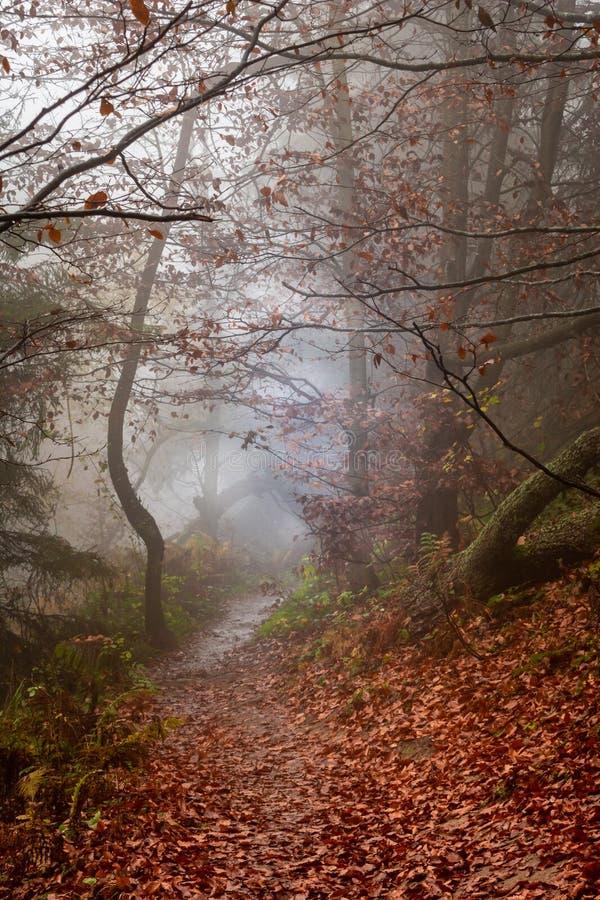Automne dans un chemin forestier flou sauvage à nulle part Parc national de Bieszczady image libre de droits