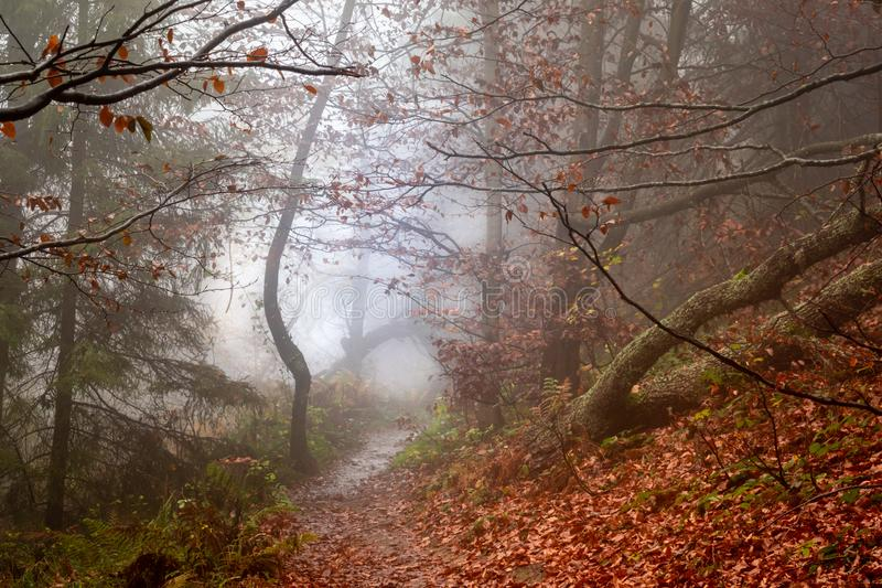 Automne dans un chemin forestier flou sauvage à nulle part Parc national de Bieszczady photographie stock