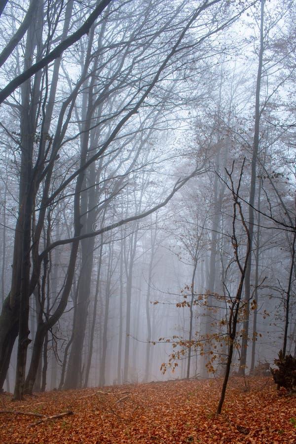 Automne dans un chemin forestier flou sauvage à nulle part Parc national de Bieszczady photo stock