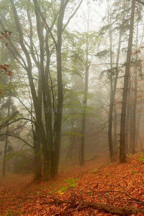 Automne dans un chemin forestier flou sauvage à nulle part Parc national de Bieszczady photographie stock libre de droits