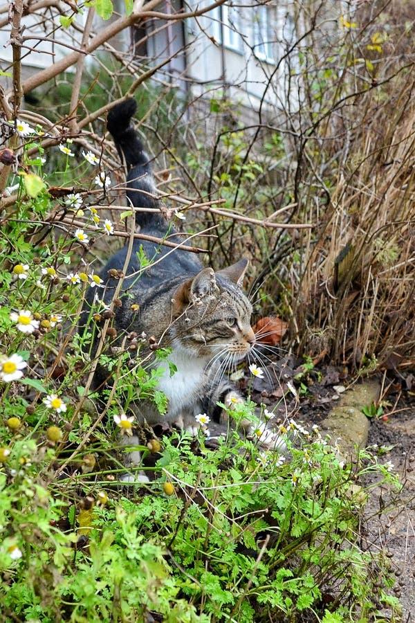 Automne de chat photographie stock