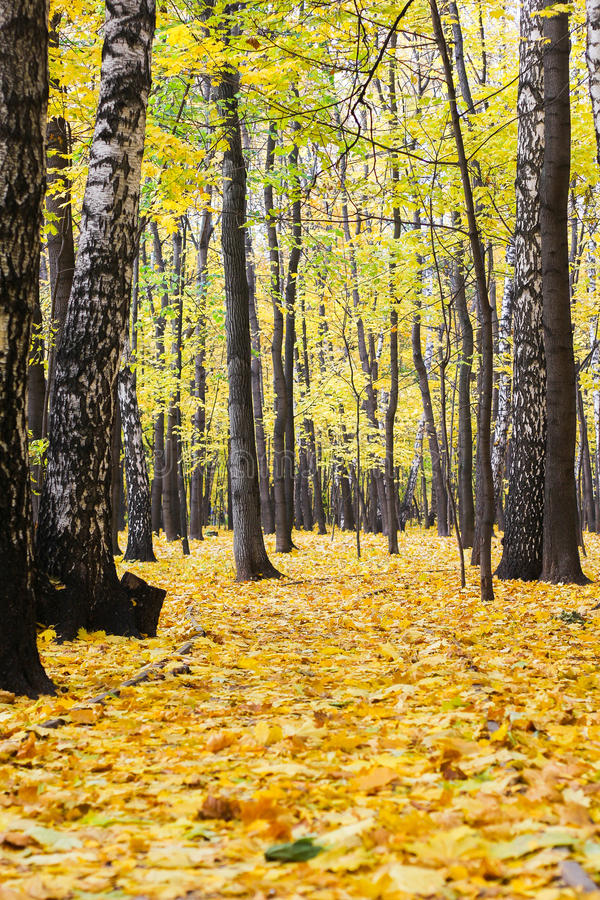 Automne de forêt ensoleillé image stock