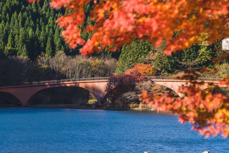 Automne de lac Usui photos libres de droits