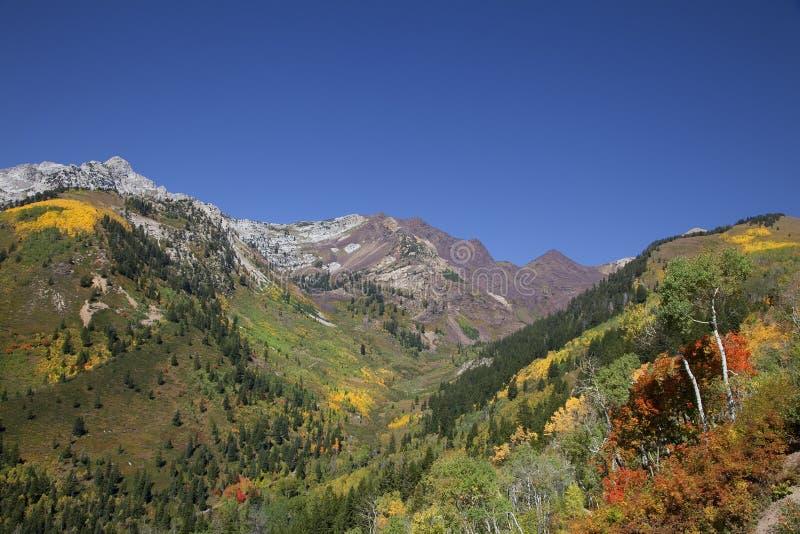 Automne de montagne rocheuse photos libres de droits